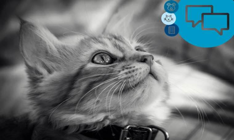 Paws and clause: Avoiding an advertising cat-astrophe when featuring animals